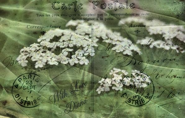 Картинка цветы, стиль, фон, открытка