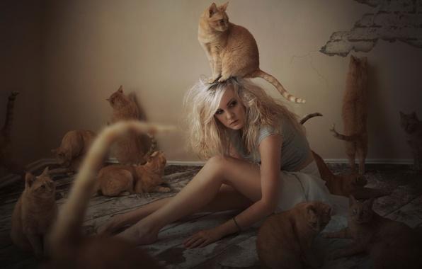 Картинка девушка, кошки, коты, рыжие