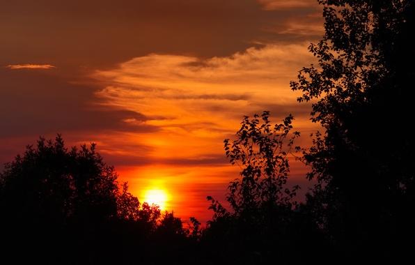 Картинка небо, солнце, облака, деревья, закат, силуэт, зарево