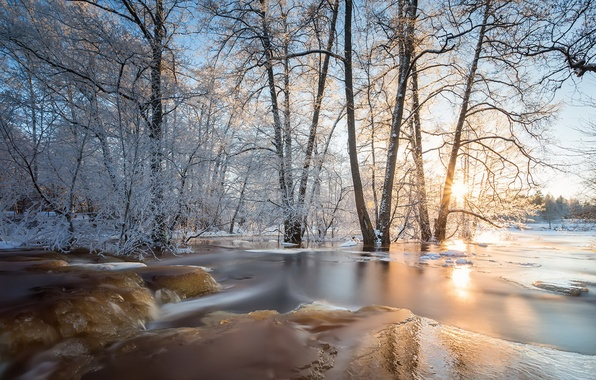 Картинка лес, природа, лёд, весна