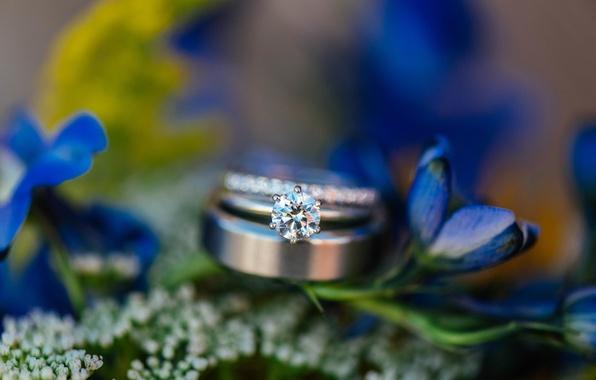 Картинка цветы, камень, кольцо, обручальное, синие лепестки