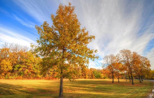 Картинка дорога, осень, деревья, парк, дерево