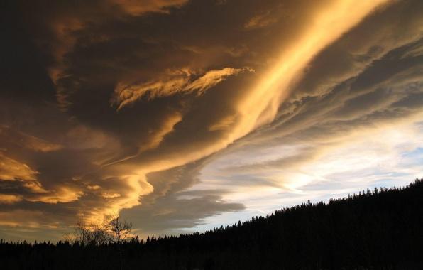 Картинка лес, небо, облака, закат, природа