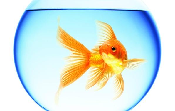 Как перестать плавать в собственном негативе Zolotaya-rybka-plavaet