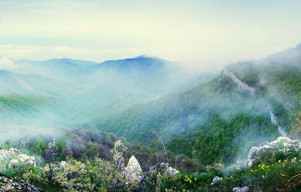 Картинка небо, горы, туман, фото, птица, Лес