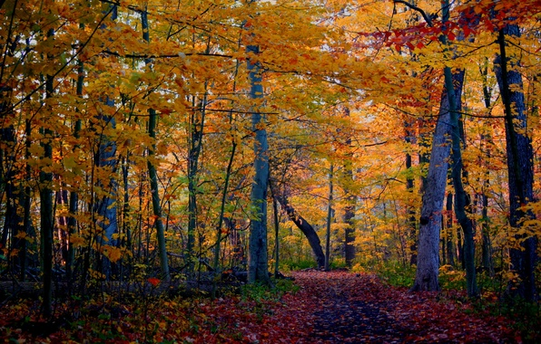 Картинка осень, лес, деревья, природа, фото, тропа