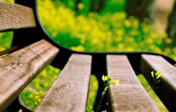 Картинка цветок, макро, цветы, скамейка, желтый, фон, widescreen, обои, размытие, лавочка, лавка, wallpaper, flower, скамья, широкоформатные, …