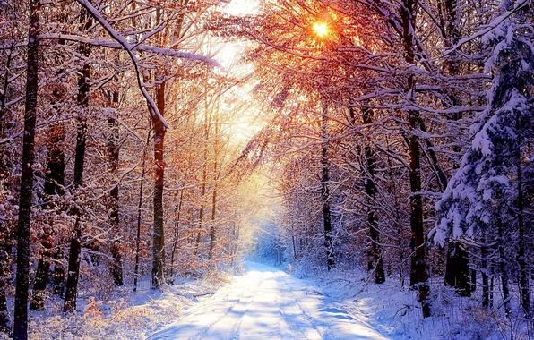 Фото обои дорога, зимнее утро, снег, лес