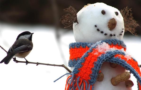 Картинка зима, снег, птица, шарф, снеговик, орехи, веточки, арахис, синица