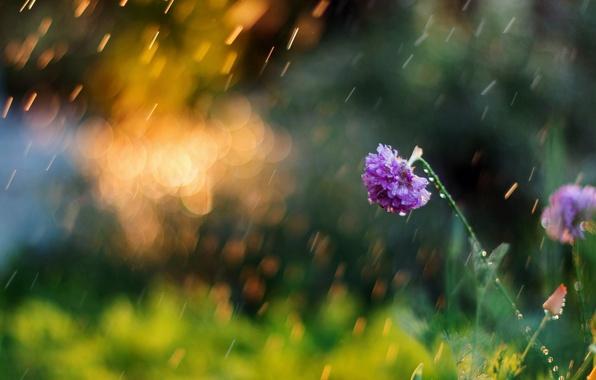 Картинка зелень, цветок, лето, цветы, природа, фон, обои, размытие, утро, луг, день, wallpaper, nature, широкоформатные, flowers, ...