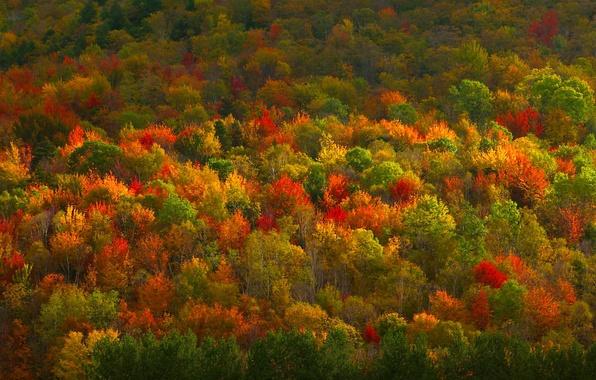 Картинка осень, лес, деревья, краски, текстура