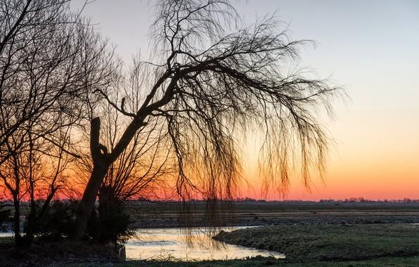 Картинка поле, пейзаж, закат, природа, дерево