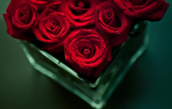 Картинка цветы, стол, розы, букет, красные, ваза