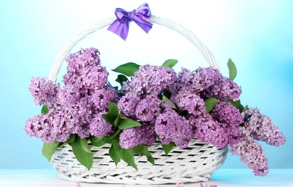 Картинка цветы, букет, бант, корзинка, сирень