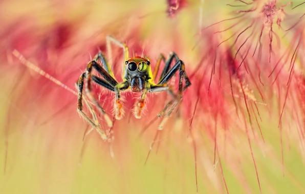 Картинка макро, паук, spider