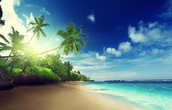 Картинка песок, море, пляж, солнце, тропики, пальмы, океан, берег, остров, summer, beach, sea, ocean, coast, blue, ...