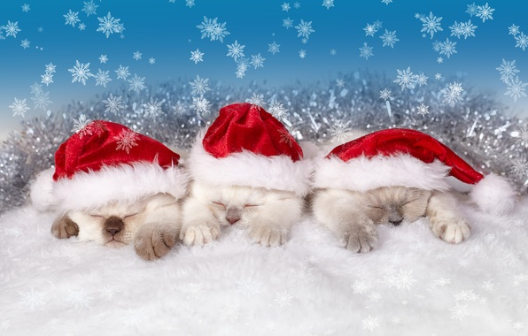 Картинка снежинки, сон, котята, трио, колпаки, троица, спящие