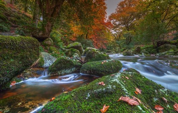 Картинка осень, деревья, река, камни, Англия, мох, Devon, England, Девон, Dartmoor National Park, Национальный парк Дартмур