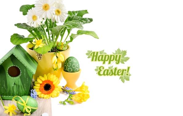 Картинка фото, Пасха, Яйца, Праздник, Герберы
