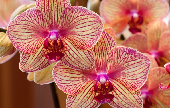 Картинка лепестки, экзотика, Орхидеи