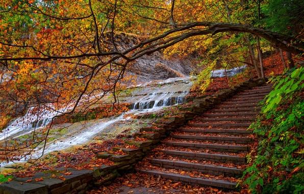Картинка дорога, осень, лес, листья, вода, деревья, горы, природа, парк, colors, colorful, forest, trees, nature, water, ...