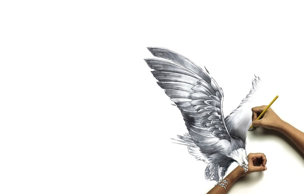 Картинка бумага, птица, рисунок, руки, когти, карандаш, реальность