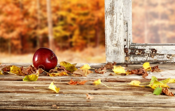 Фото обои яблоко, рама, осень, лес, листья