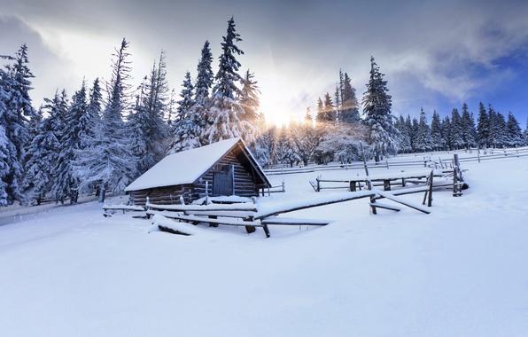 Картинка зима, лес, солнце, снег, деревья, следы, ели, сарай, ограждение, хижина, ёлки