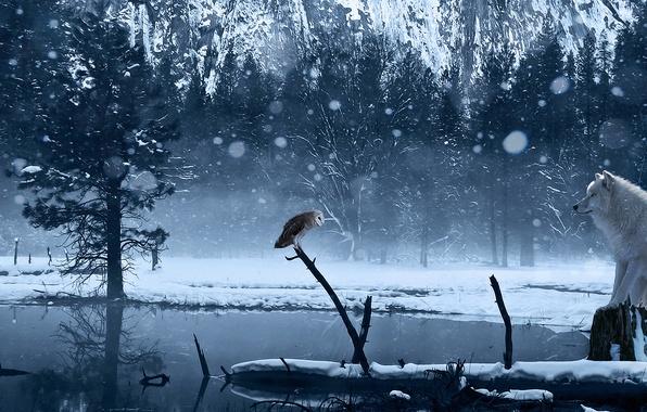 Картинка зима, снег, озеро, сова, волк, арт