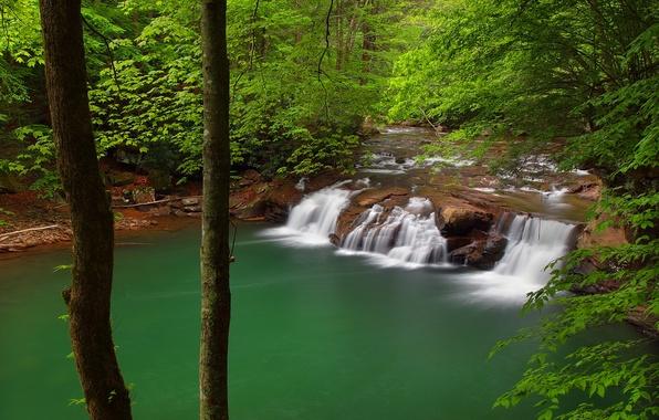 Картинка лес, деревья, река, водопад, каскад, West Virginia, Западная Виргиния, New River Gorge National River, New …
