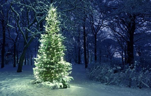 Картинка свет, Ель, гирлянды, снег.