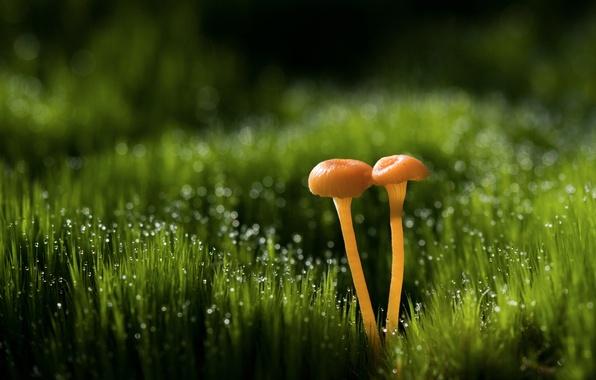 Картинка трава, капли, макро, роса, блики, грибы, боке