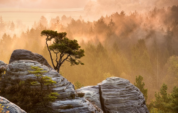 Картинка лес, свет, природа, туман, камни, дерево, скалы, утро