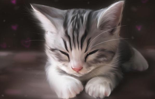 Картинка кошка, кот, морда, котенок, рисунок, арт, спит