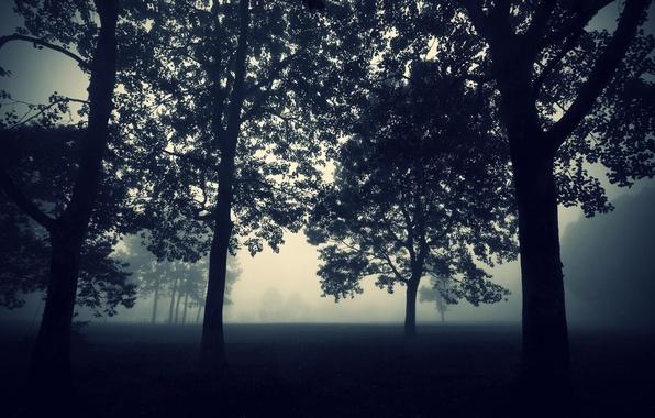 Фото обои Природа, Вечер, Туман, Деревья, Лес, Мрак, Обои, Сумерки, Darkness, Tree, Мистика, Mist