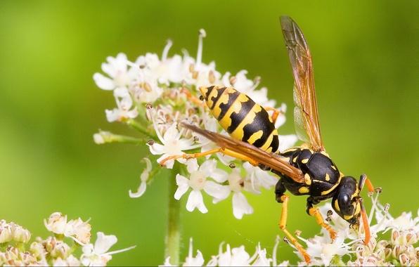 Картинка зелень, пчела, Цветок