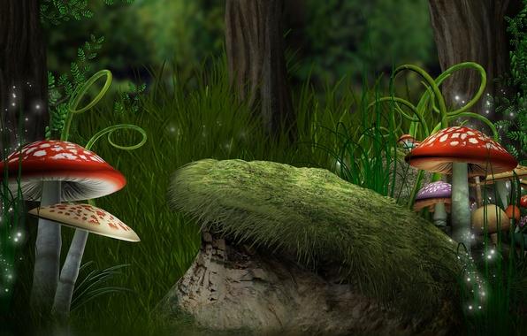 Картинка лес, трава, грибы, папоротники, мухоморы, forest, Magic, mushroom