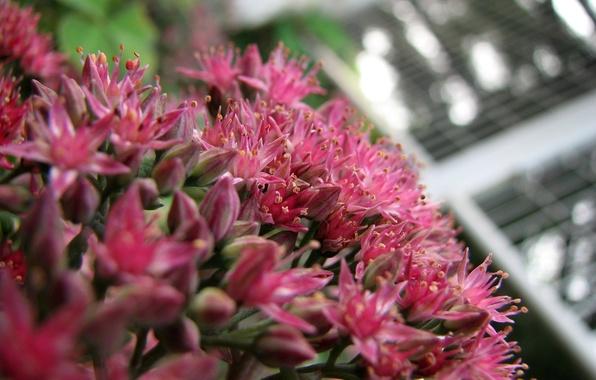 Картинка цветок, макро, макросьемка