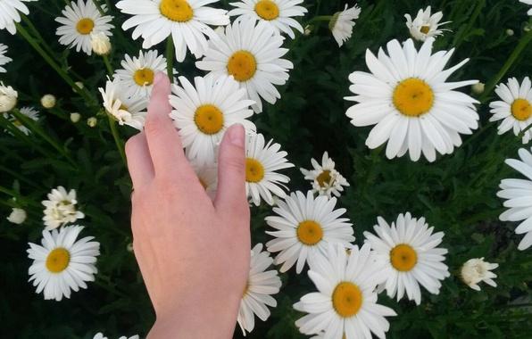 Картинки лето руки