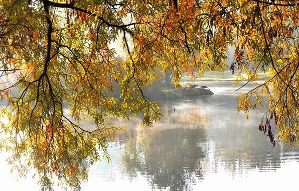 Картинка осень, деревья, озеро, парк, ветви
