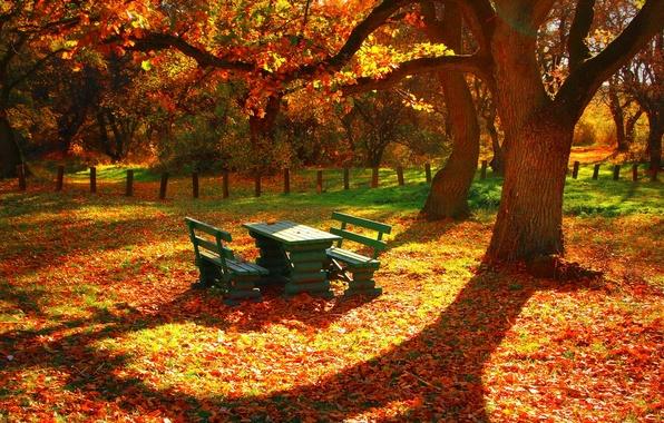Картинка листья, деревья, стол, забор, Осень, скамейки