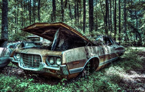 Картинка машина, лес, дерево, Ford, старый, forest, автомобиль, сша, tree, 1972, vehicle, old car, Gran Torino …