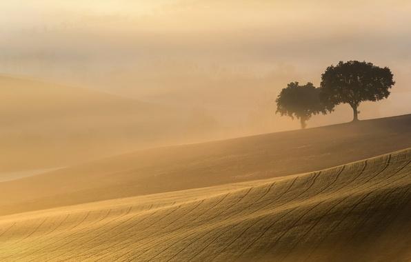 Картинка поле, свет, деревья, пейзаж, туман, утро