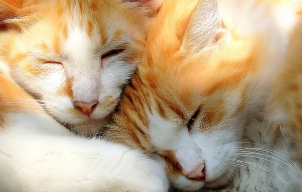 Картинка кошки, сон, котята, парочка, мордочки, спящие