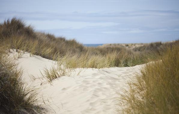 Картинка песок, море, небо, трава, природа, дюны