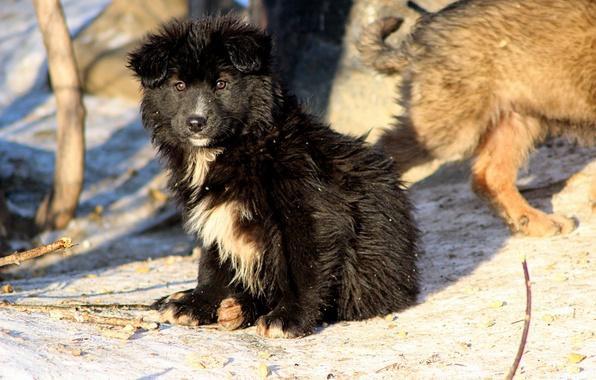 Картинка зима, взгляд, снег, собака, щенок, бездомный