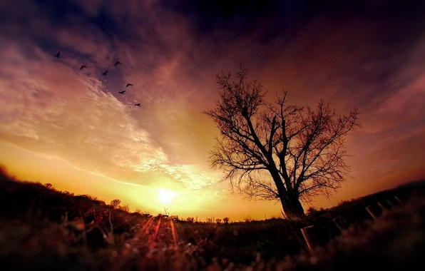 Картинка солнце, закат, ночь