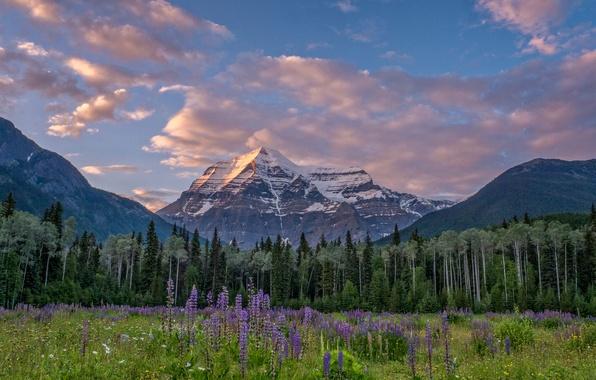Картинка лес, деревья, цветы, горы, луг, Канада, Canada, British Columbia, Британская Колумбия, Канадские Скалистые горы, Canadian …