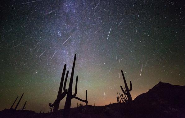 Картинка космос, звезды, ночь, кактусы