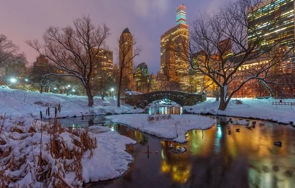 Картинка зима, снег, деревья, ночь, ветки, озеро, отражение, утки, Нью-Йорк, небоскребы, зеркало, Центральный парк, Соединенные Штаты, …